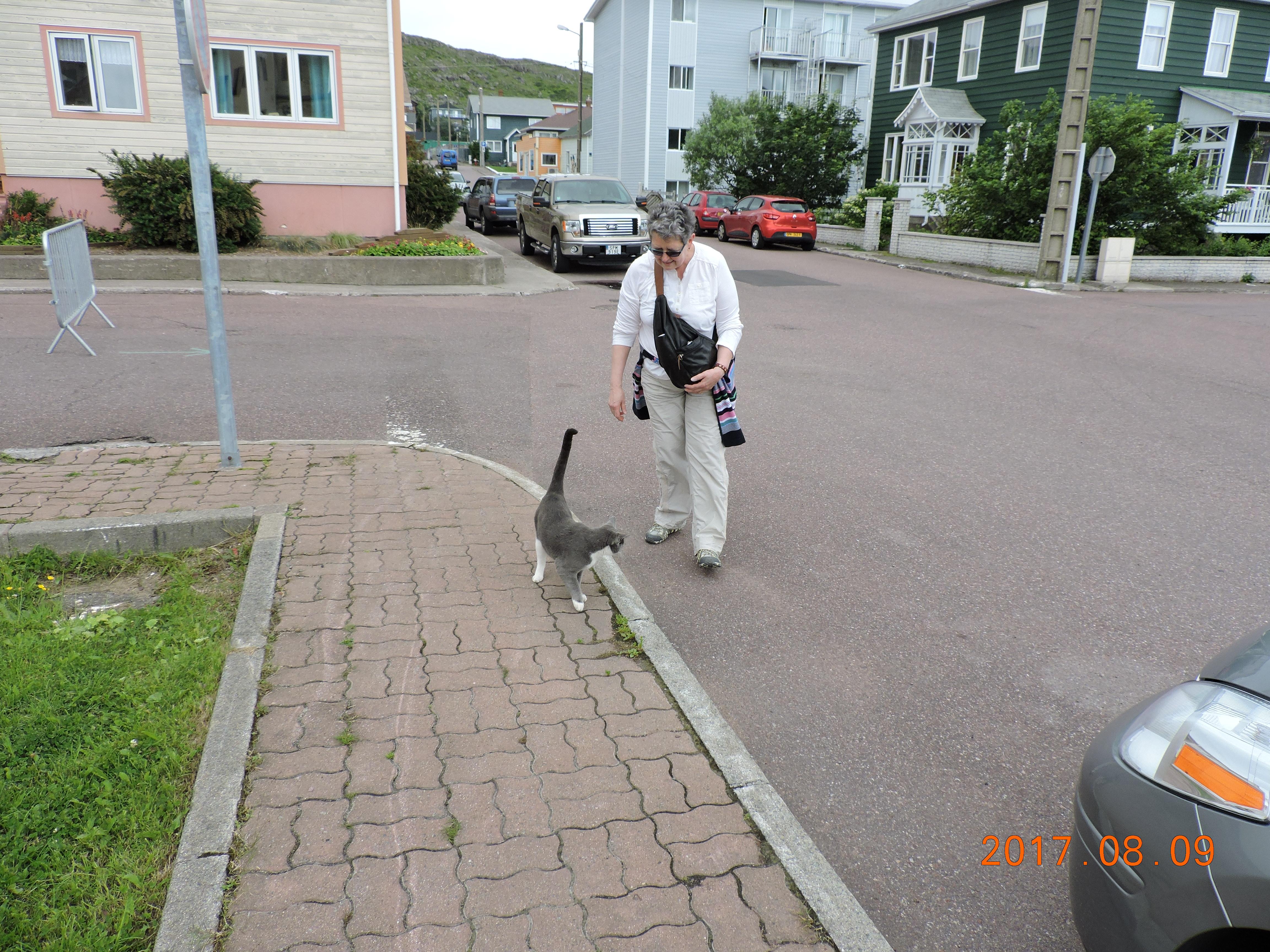 Cat of St. Pierre.